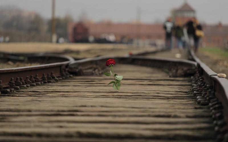 Rose in the train tracks in Auschwitz
