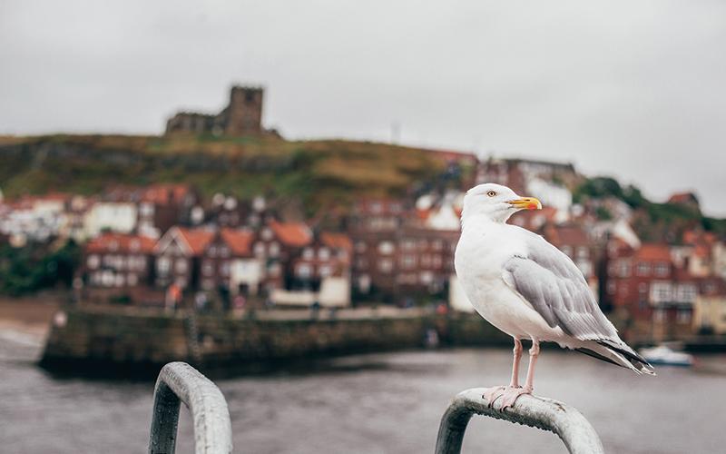 Seagull stood on metal