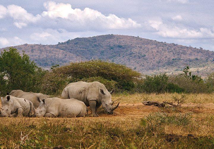 Walking Safari in Pilanesberg National Park