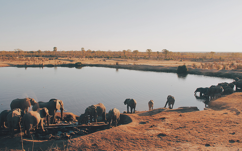 Elephants drinking water at a watering hole