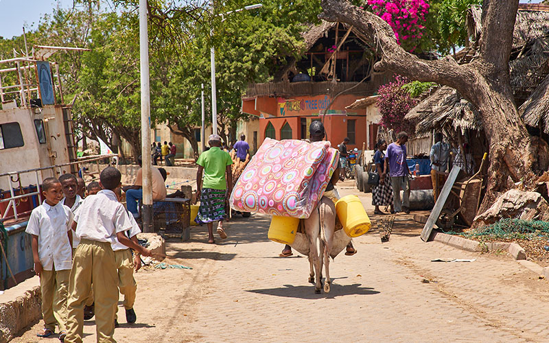 Donkey carrying things on its back