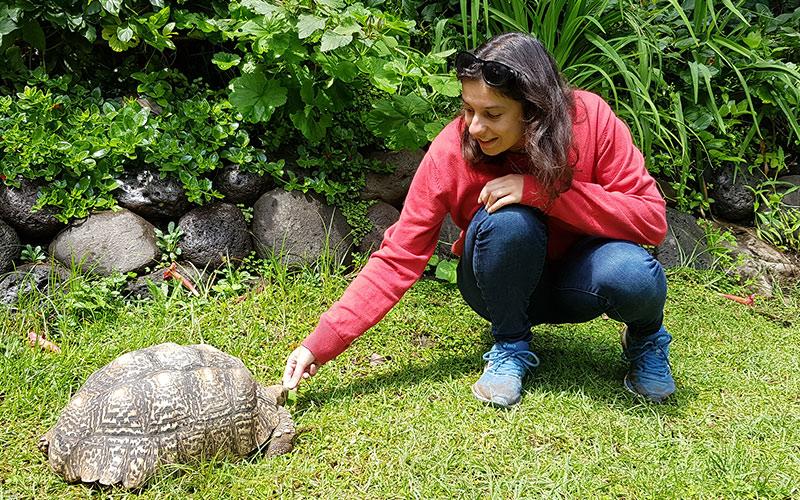 Girl feeding tortoise
