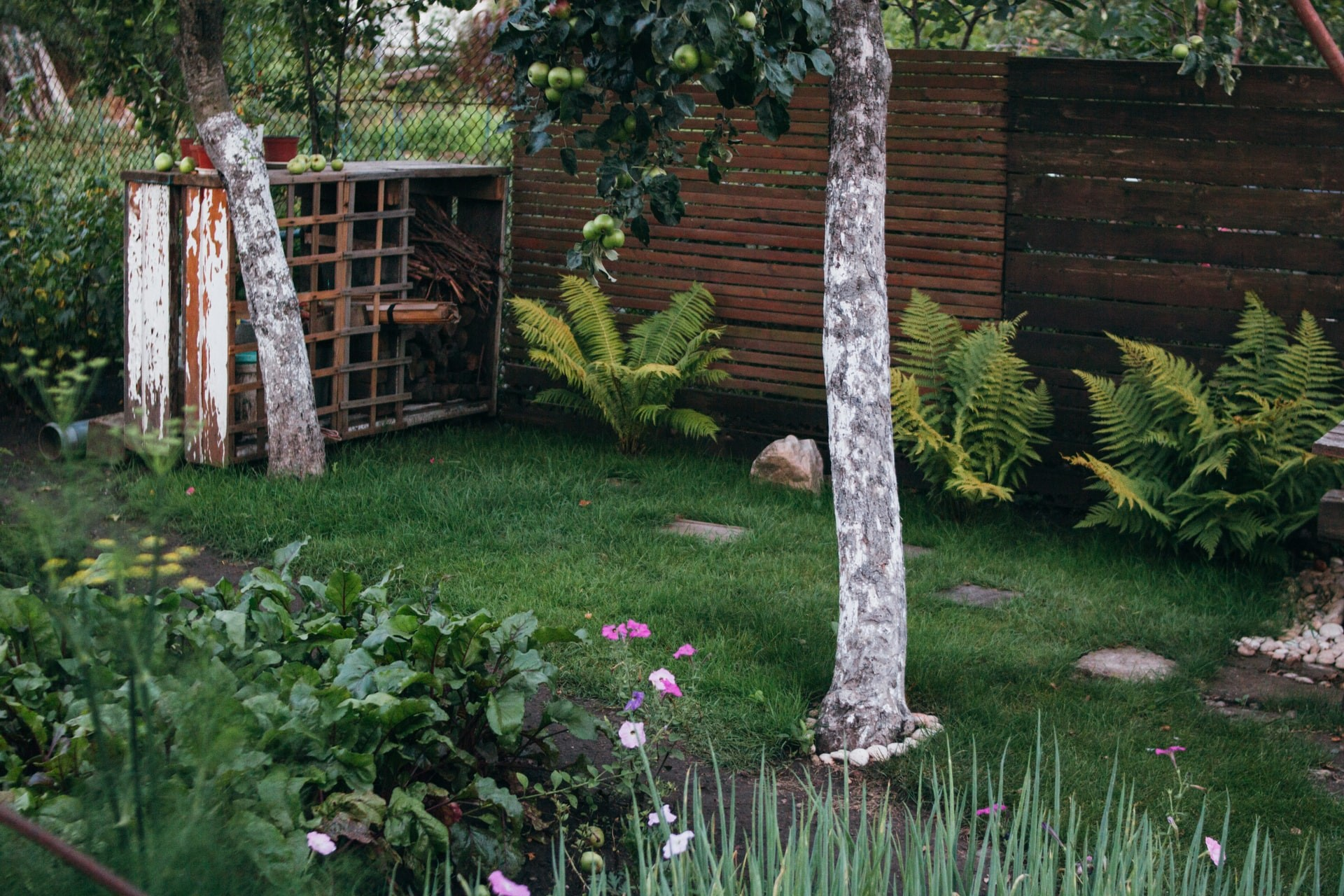 Back garden with trees and plants