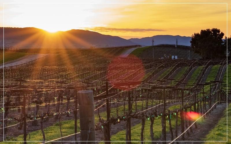 California vineyards sunset